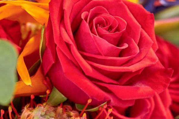 fleur-elle-boeketten-3